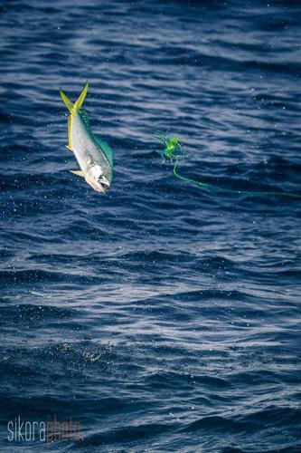 Fishing on WOMBAT